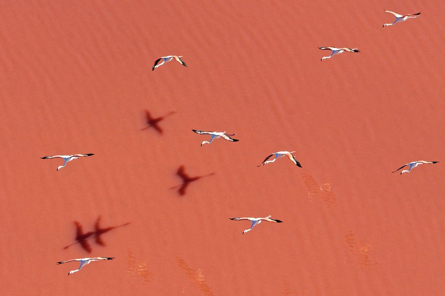 die Vögel beobachten