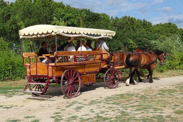 La Camargue en calèche avec Les Calèches de Camargue