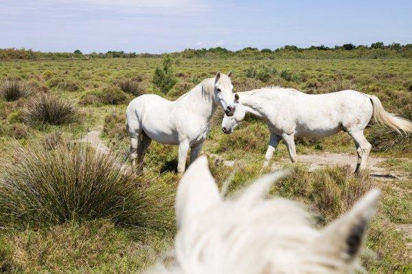 Fascinant Week-end au Domaine Terres de Sable