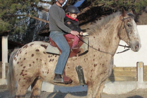 Promenade à cheval dans la manade Jullian
