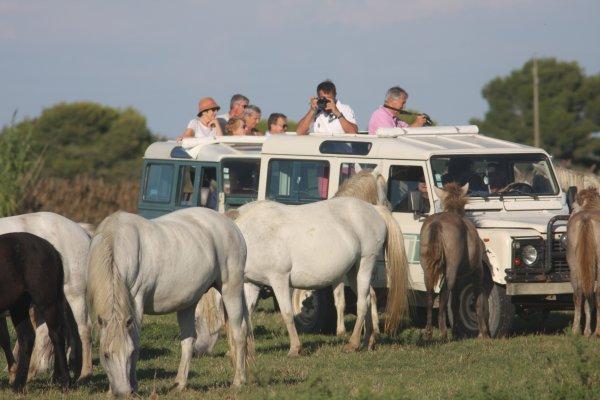Safari en 4x4 avec Camargue Découverte
